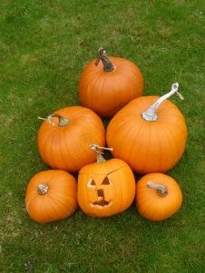 pumpkinsongrass2