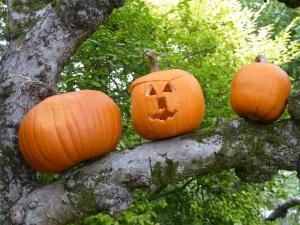 pumpkinsontrees