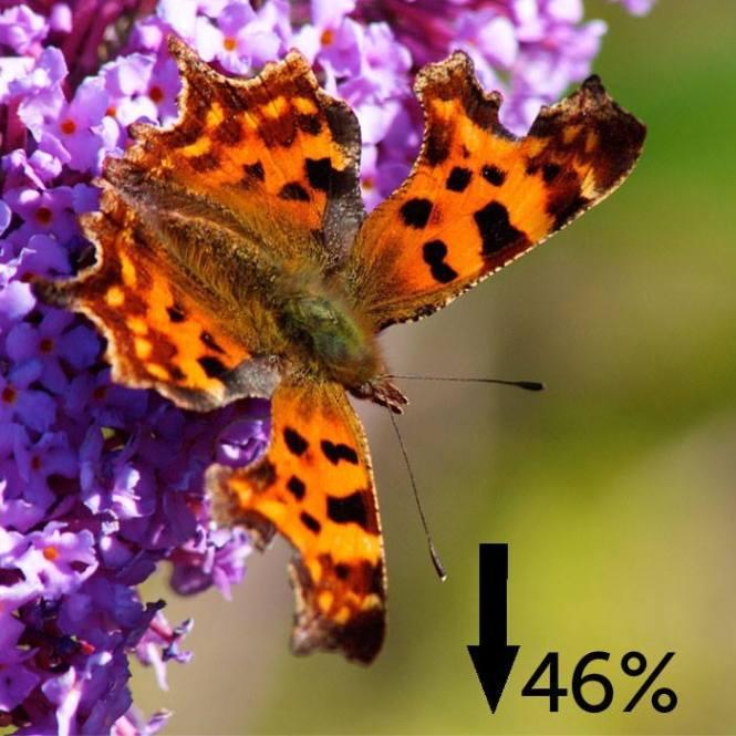 butterflyjpg