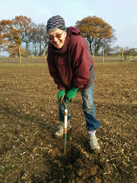 Planting a forest at Heartwood