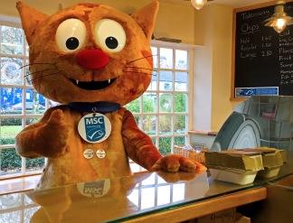 Murdock the MSC cat