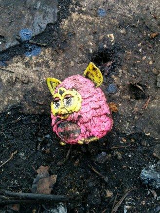 Pig in waste!
