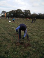 tree-planting1