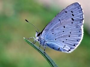 JoConnorholy-blue-1
