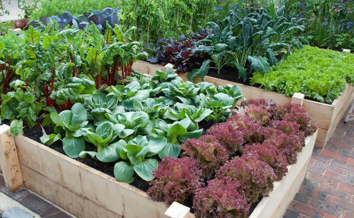 The Easiest Food To Grow In A Sustainable Vegetable Garden