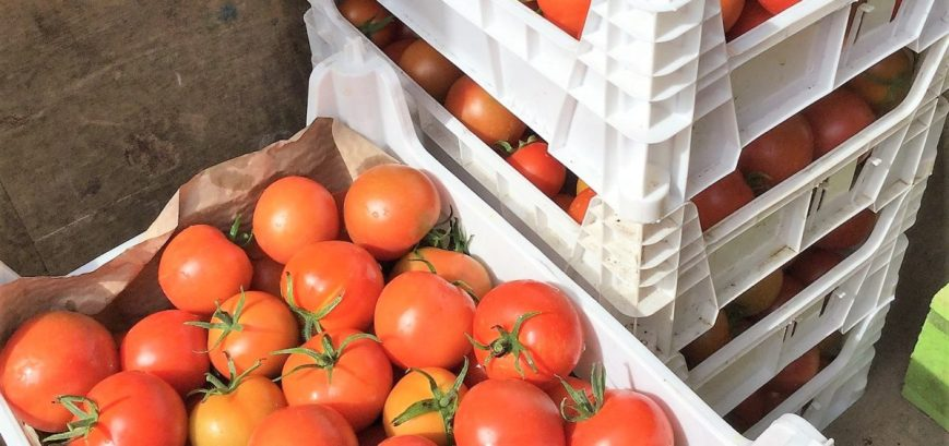 tomatoes sustainable vegetable garden carpenters nursery