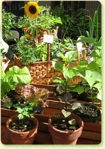 11-5 - st pauls seedling-service