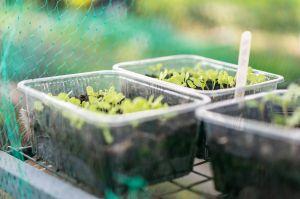 12-5 97 - plot 31 seeds