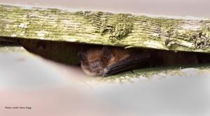 14-5 55 Dusk Bat Walk Image _c_Harry_Hogg_c_