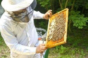 18-5 56 Bee photo for sustainability SPC