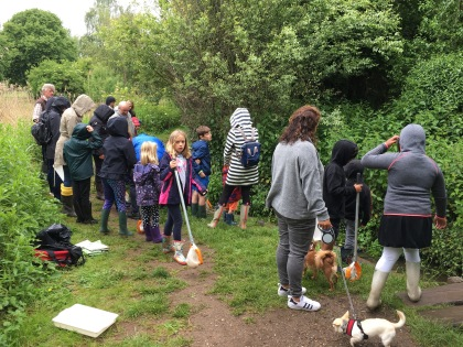 River Dipping in Batford Springs, Harpenden