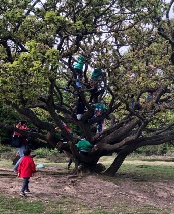 Tree climbing with Woodcraft Folk