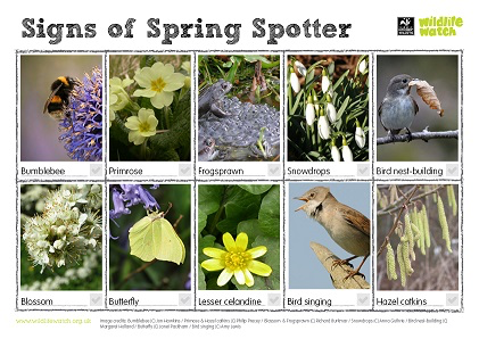 signs of spring spotter