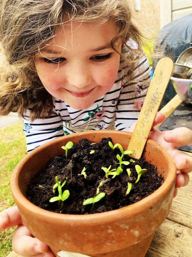 Lee Wood blog seedlings photo 3