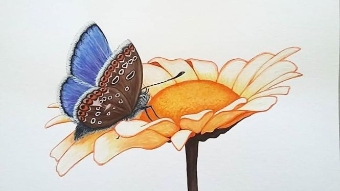 Chloe Valerie image - Butterfly and daisy