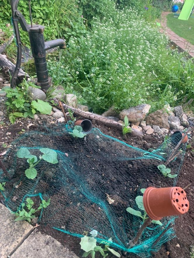 Helen Burridge photo first time veg grower second attempt at netting