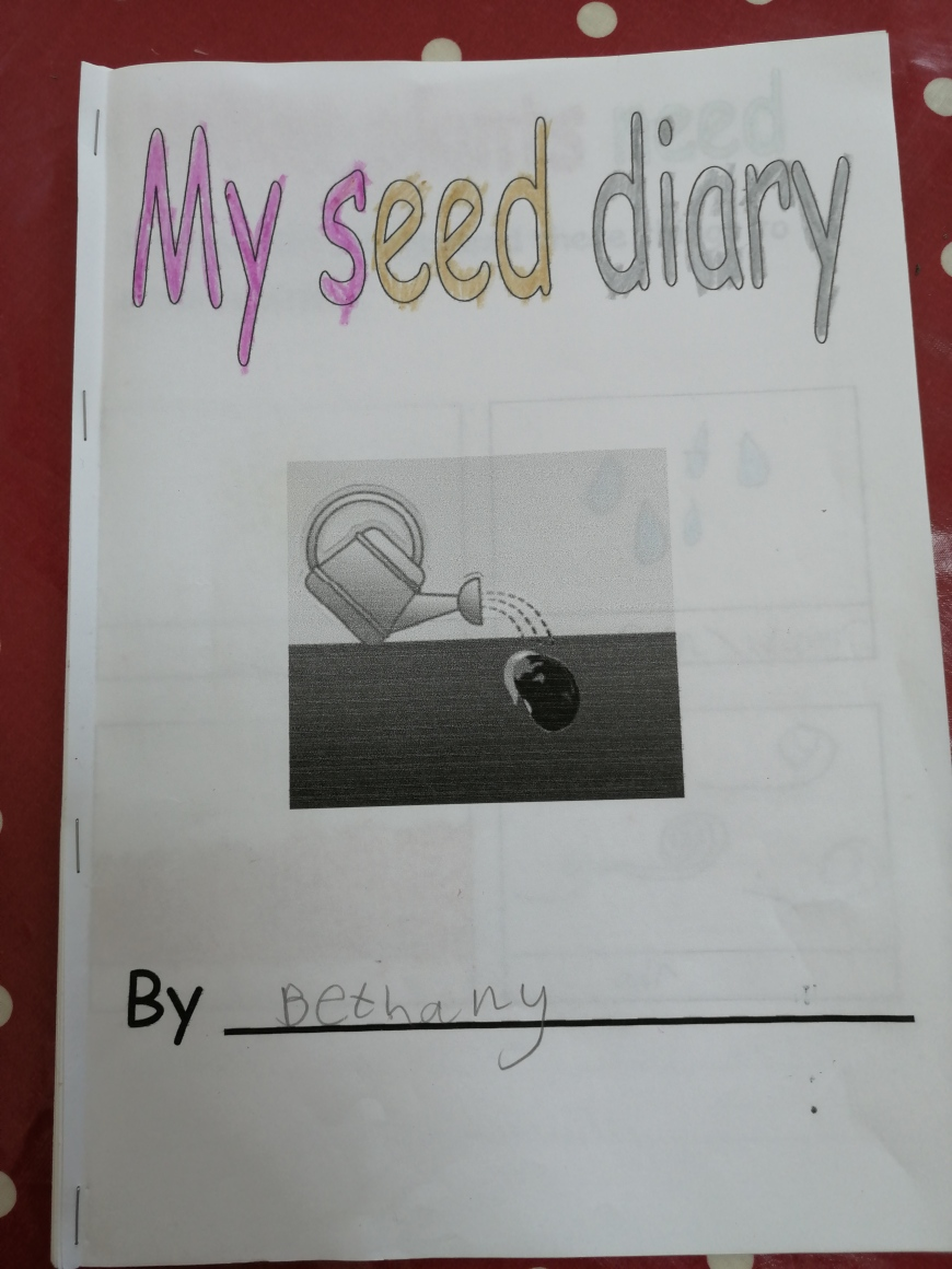 Lockdown competition - Bethany age 8 and seed diary