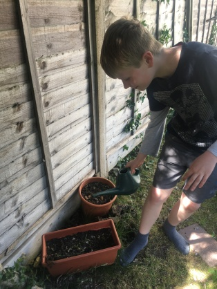 Lockdown competition - Charlie age 10 and vegetables