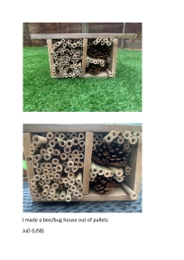 Lockdown competition - Justin age 14 bug hotel
